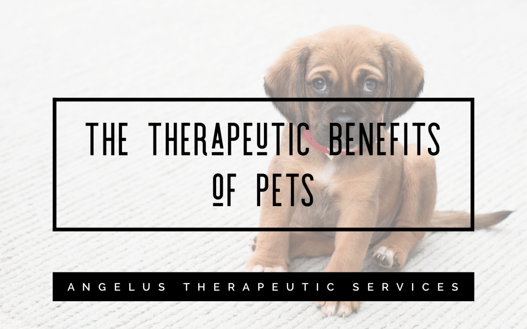 The Therapeutic Benefit of Pets